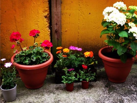 Photo 4_garden